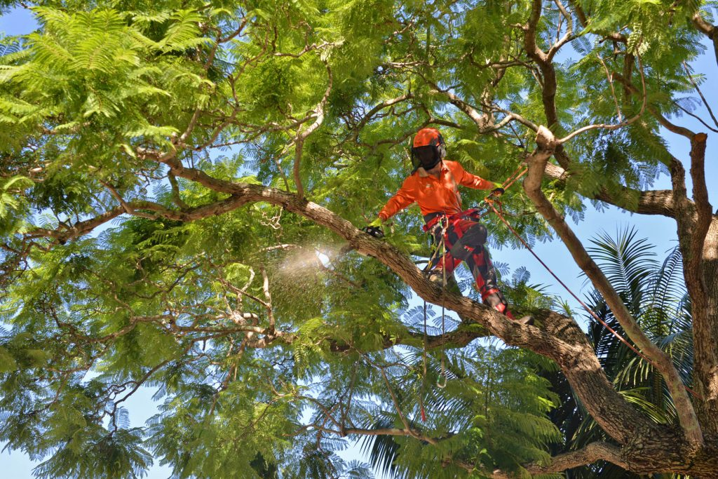 Tree Lopping in Rockhampton